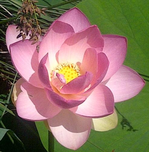 Lotus Mougins--